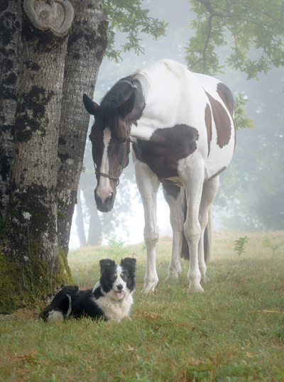 Horse and Dog - Broodmare with Difficulties