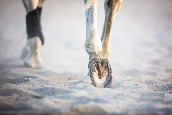 Healthy Horse Hooves