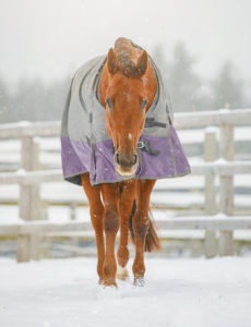 Horse in a Blanket During Winter