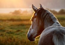 Thankfulness for Horses