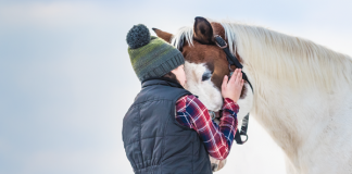 Horse in Winter - Keeping Pony Healthy During Winter