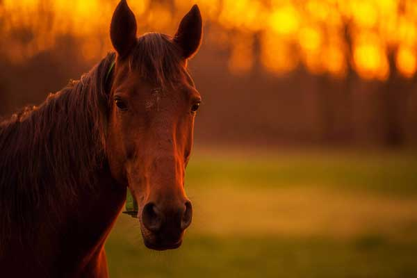 equine allergies and asthma during fall