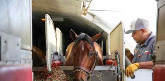 Horse Transportation Driver - horse career without degree