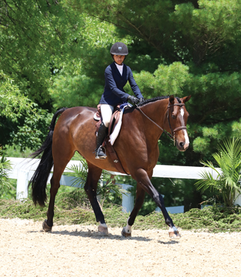 Trotting Hunter Horse
