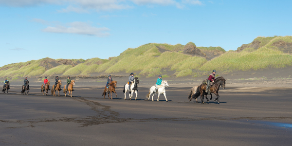 Icelandic Horses on the Beach