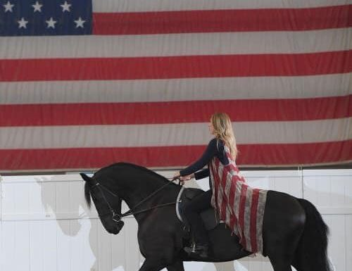 Friesian Show Horse - IFSHA World Show