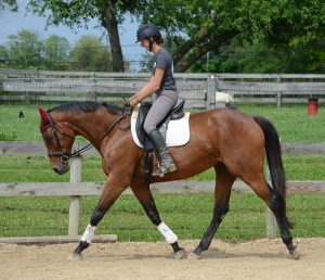 Adoptable Horse of the Week Indiana