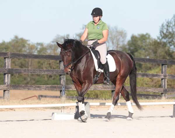 English Training Rider - Leg Aid