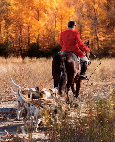 6 tips to keep equine boredom at bay.