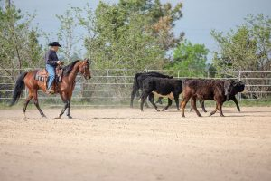 Introducing Your Horse to Cattle