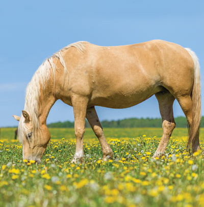 Tips for keeping your horse healthy in springtime.