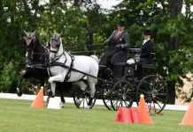 2021 United States E2021 USEF Advanced Pair Horse Combined Driving National Championship