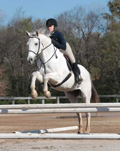 Gray Horse Jumping in Style