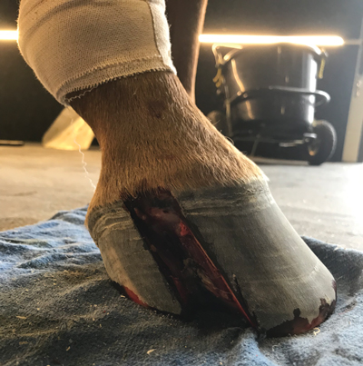 Hoof condition - Keratoma after surgery