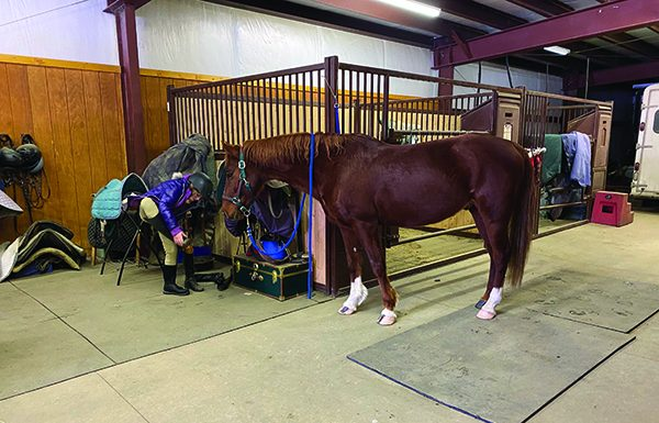 Kidd (now Kevin) the American Saddlebred