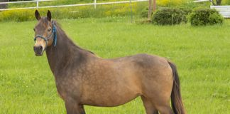 La Pie - Adoptable Horse of the Week