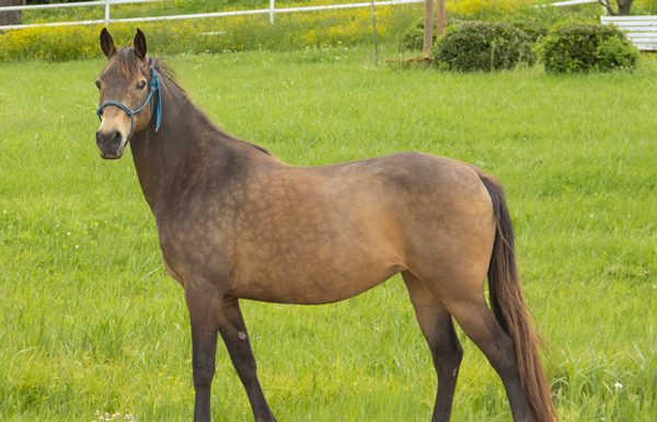 La Pie - Adoptable Horse of the Week