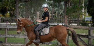 My Right Horse Adoptable Horse of the Week - Sonora