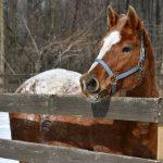 Faithful - Adoptable Horse of the Week.