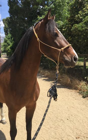 Kara, a TIP Mustang