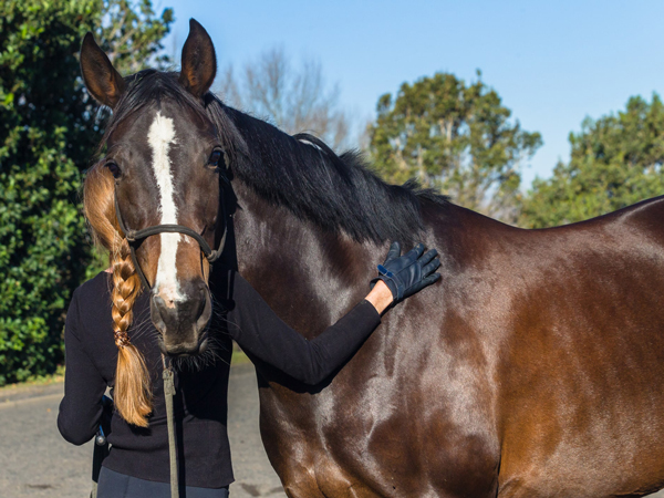 Latex Allergies May Play Role in Equine Asthma - Horse owner gloves