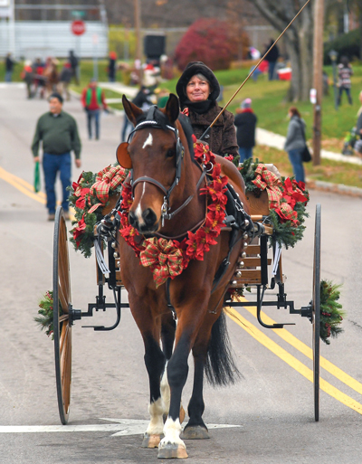 Driving horse and carriage parade