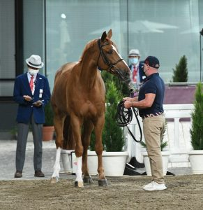 Lee McKeever, head groom for McLain Ward and Contagious