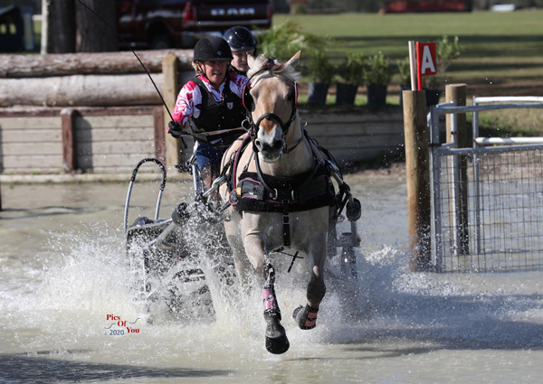 Leslie Berndl and Sweetwater's Marmaduke at the USEF Preliminary Combined Driving National Championships
