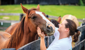 Loving on a Horse - How to help a local rescue