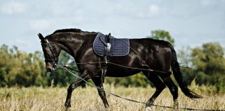 Longeing and Riding Exercises