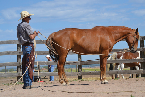 Exercise a senior horse on long lines