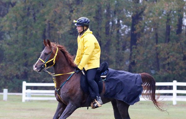 Marcia Weilbach and Zanthus Fury in the USEF Endurance National Championships
