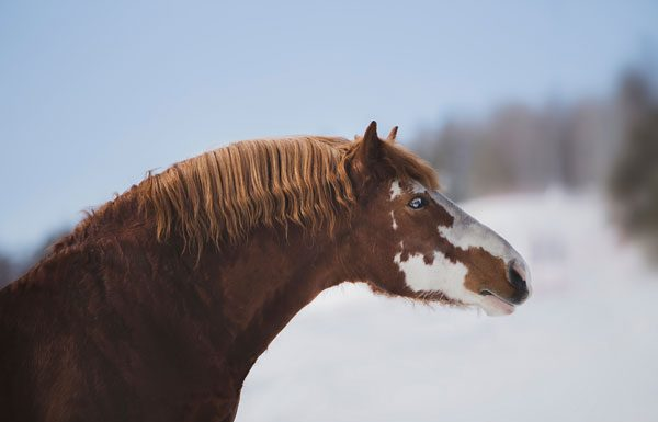 Horse with a cresty neck