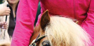 Miniature Horses on planes