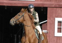 Poor Horse Behavior from Pain