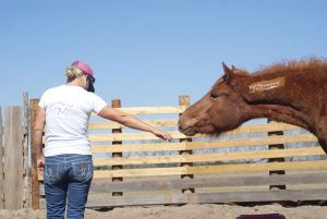Sandra Williamson works with Mustangs