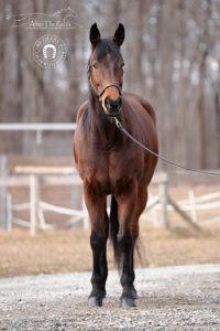 Neto- Adoptable Horse of the Week.