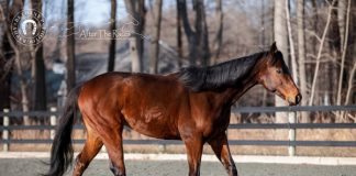 Neto - Adoptable Horse of the Week walking.