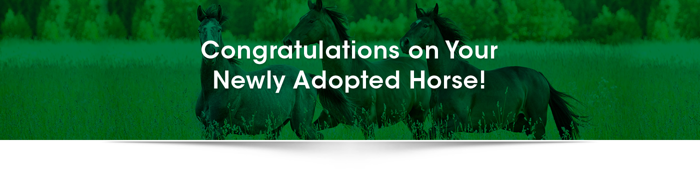 newly-adopted-horse