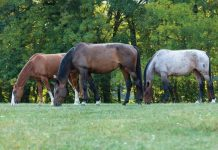 Horses Grazing - Horse Pasture Rehab