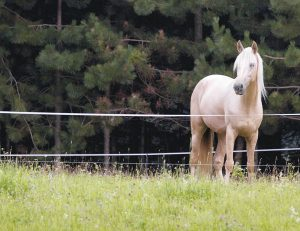 Horse with electric fence - Horse Pasture Rehab