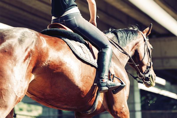 Person Riding - #GivingTuesdayNow Horse