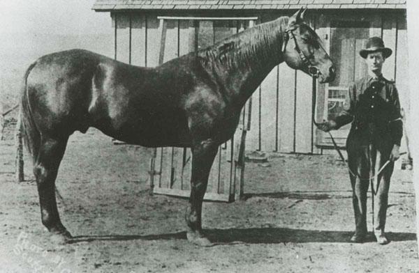 Peter McCue - Quarter Horse