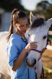 Vet petting horse's head.