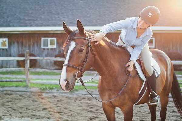 Riding - Rider petting horse