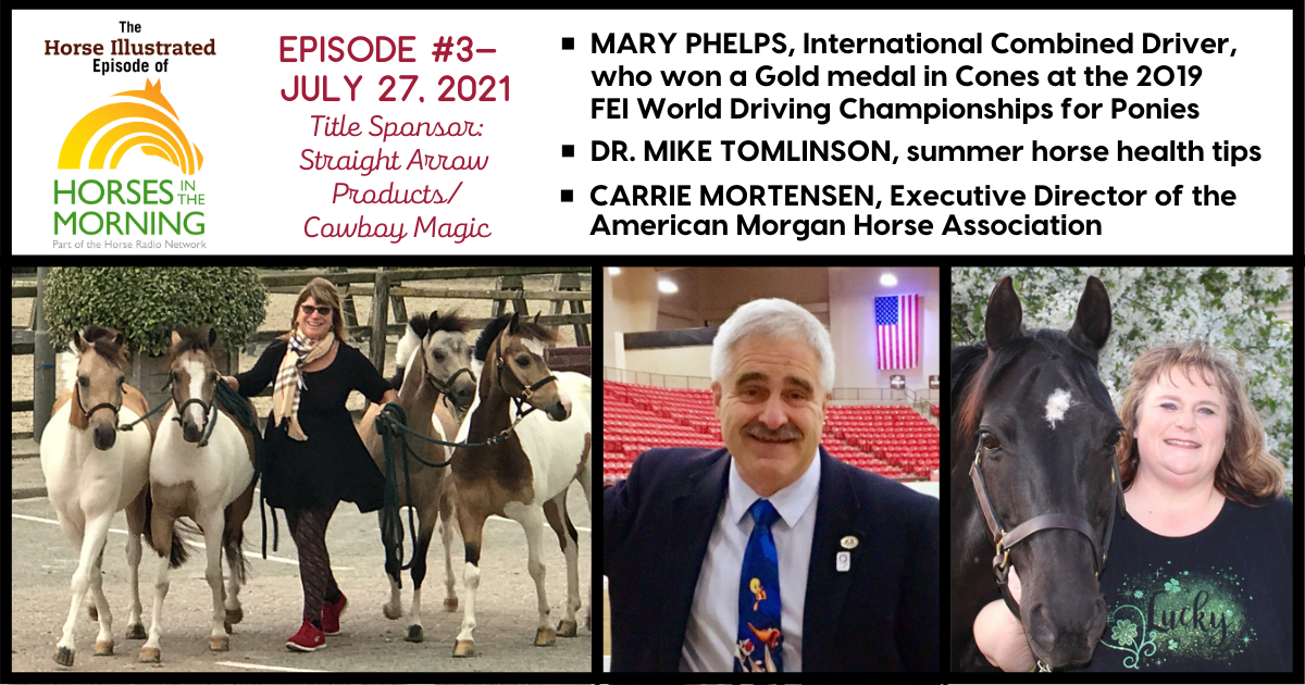 Horse Illustrated Podcast - Episode 3 - Mary Phelps - Summer Health Tips - Morgan Horse Breed