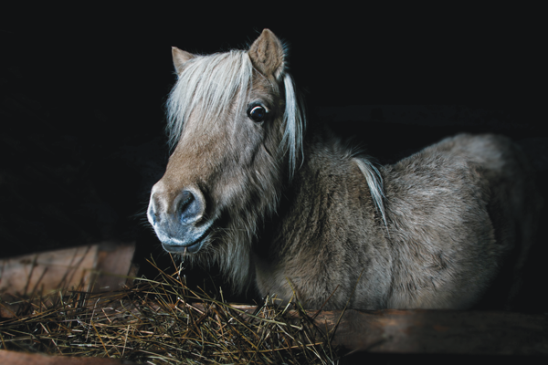Pony at Night - Client Takes Care of Vet