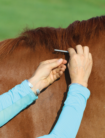 Pulling the mane grooming makeover - Emma Ford
