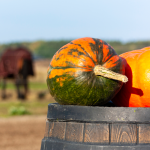 Pumpkin for Horses