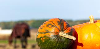 Pumpkin for Horses